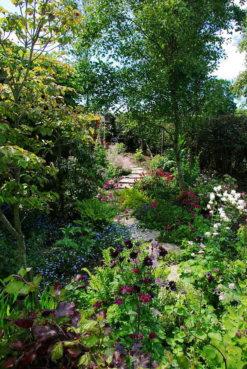 A light-shady, stepping-stones path winding through a woodland garden border, between ferns and summer flowers such as Aquilegia, geraniums and forget-me-nots