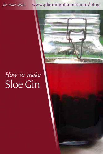 How to make sloe gin - from Weatherstaff garden design software