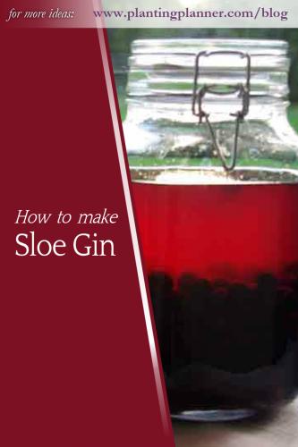 How to make sloe gin - from Weatherstaff garden design software