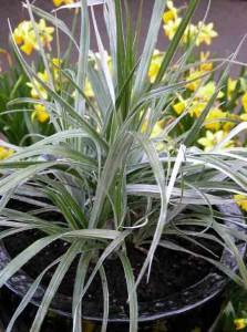 Garden Planting Styles - architectural plants in a contemporary garden