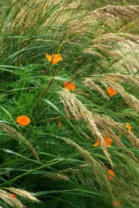 Garden Planting Styles - movement and informality in a prairie-style garden