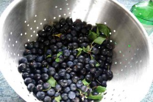 Gathered sloes