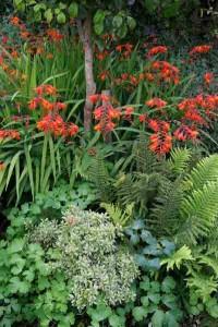 Garden Planting Styles - a woodland-style garden