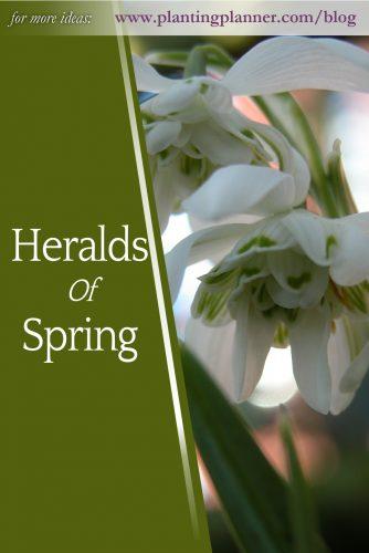 Heralds of Spring - from Weatherstaff garden design software