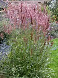 Wildlife Friendly Plant - Miscanthus sinensis Gardening Software Blog