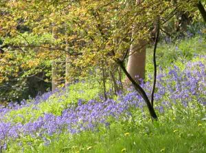 Bluebell woods garden plans software