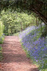 Bluebell woods garden design software
