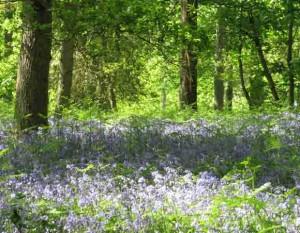Bluebell woods garden plans software