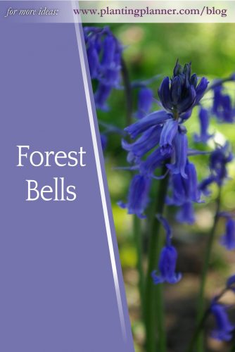 Forest Bells - from Weatherstaff garden design software