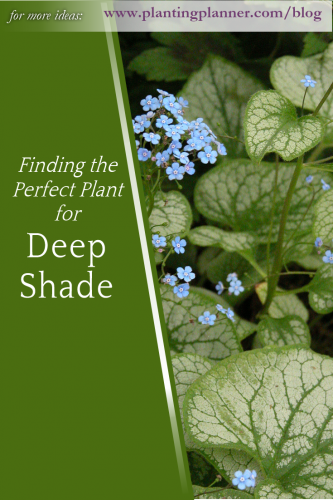 Finding the Perfect Plant for Deep Shade - from Weatherstaff garden design software