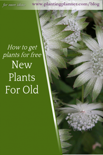 New Plants for Old - from Weatherstaff garden design software