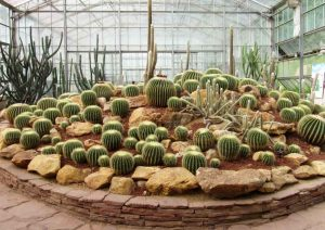 Arid Plants Glasshouse