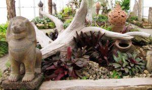 Bromeliads Glasshouse