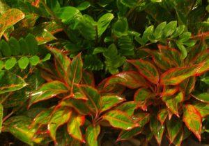Tropical plants - good for living walls, landscape design