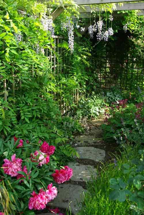 Wisteria and pergola Weatherstaff Garden Design Software