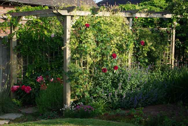 Peonies, roses and pergola garden design