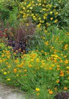 Exuberant planting in a cottage style landscape design