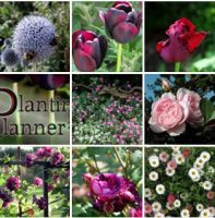 The Weatherstaff PlantingPlanner - garden design software