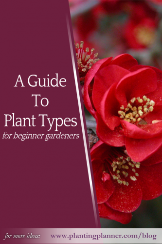 Guide to Plant Types for Beginner Gardeners - Weatherstaff PlantingPlanner