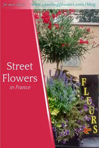 Street Flowers in France - from Weatherstaff garden design software