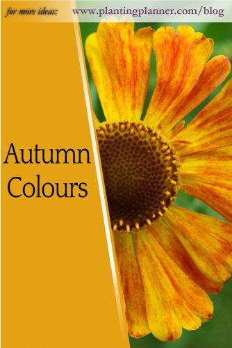 Autumn Colours - from Weatherstaff garden design software