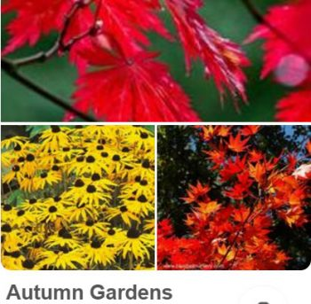 Autumn gardens @ uk.pinterest.com/plantingplanner