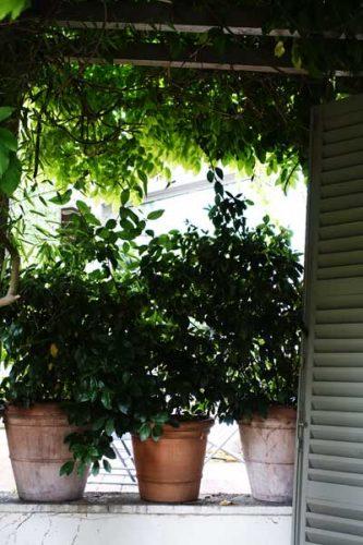 Mediterranean flowerpots - garden ideas