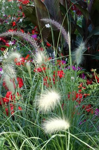 Contrasting textures in a planting plan