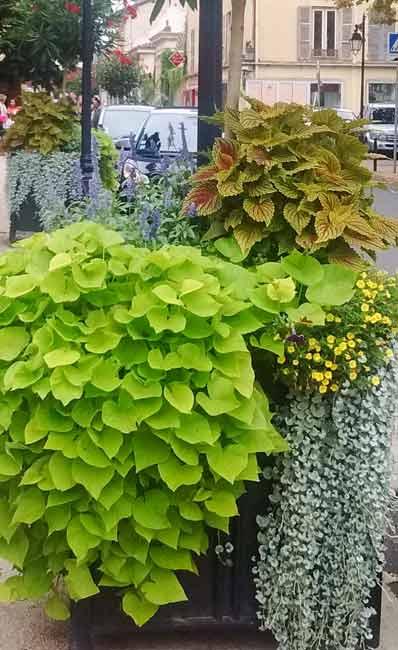 Displays of flowers - border ideas