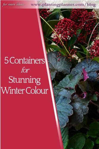 5 Containers for Stunning Winter Colour - from Weatherstaff garden design software