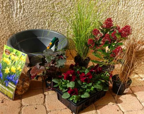 Planting idea for winter flower beds and containers