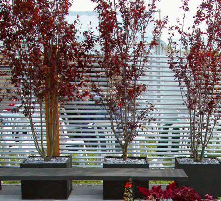 Contemporary planting idea