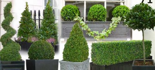 Topiary - ideas for a formal garden border
