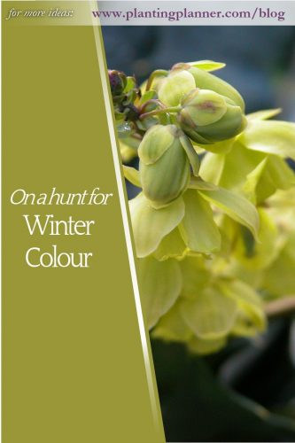 On a Hunt for Winter Colour - from Weatherstaff garden design software