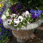 Garden urn with pansies - ideas for narrow gardens from Weatherstaff