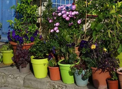 Informal collection of pots - landscaping design ideas from Weatherstaff garden design software