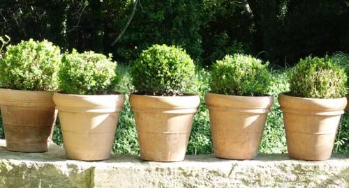 Box topiary in a Mediterranean garden - from the Weatherstaff garden design software