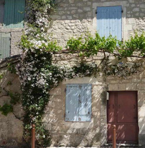 Jasmine in a Mediterranean garden