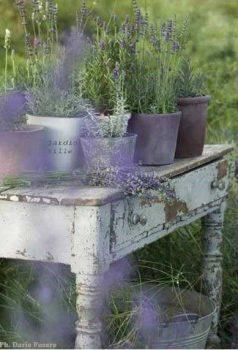 Lavender - an essential ingredient of a Mediterranean garden