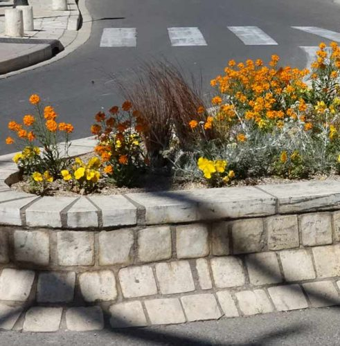 Yellow planting scheme - from the Weatherstaff PlantingPlanner