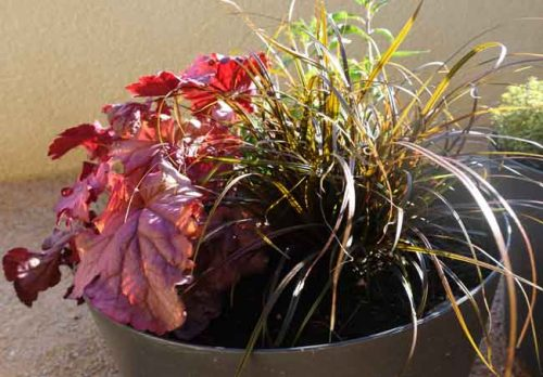 Planting containers for year round interest - Weatherstaff garden design software
