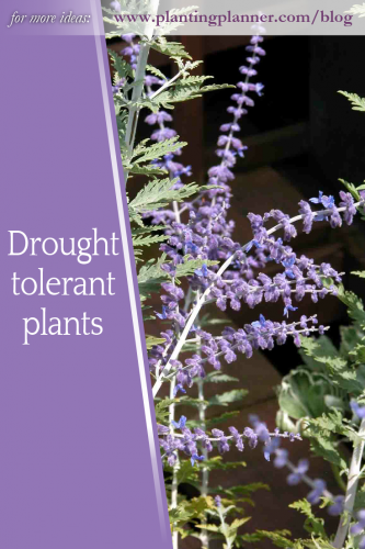 Drought tolerant plants from Weatherstaff PlantingPlanner