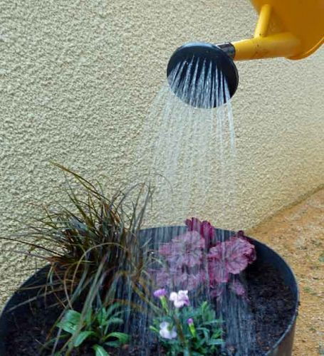 Water plants in well - guide to container gardening by Weatherstaff garden design software