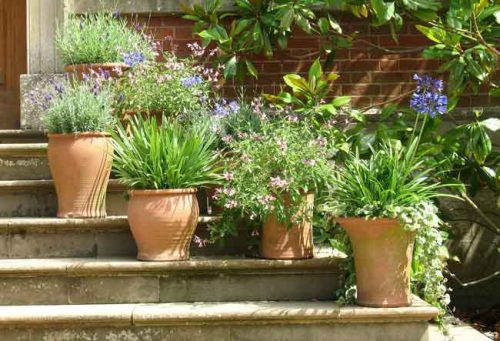 A collection of terracotta planting containers