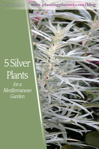 5 Silver Plants for a Mediterranean Garden - from Weatherstaff garden design software