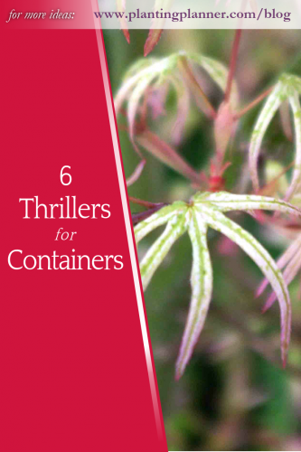 6 Thrillers for Fantastic Containers - from Weatherstaff garden design software