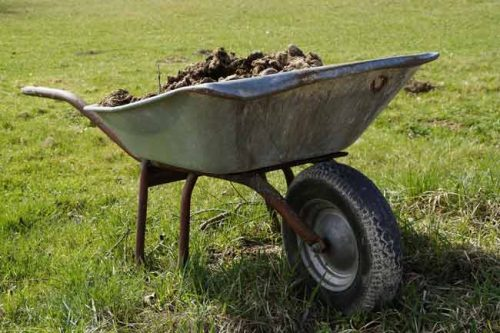 Wheelbarrow of well-rotted manure for a spring time mulch