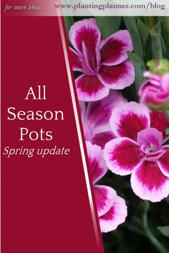 All Season Pots - spring update - from Weatherstaff garden design software