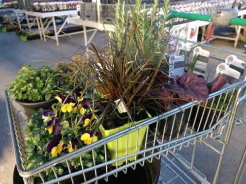 Choosing plants at the garden centre from Weanterstaff garden design blog