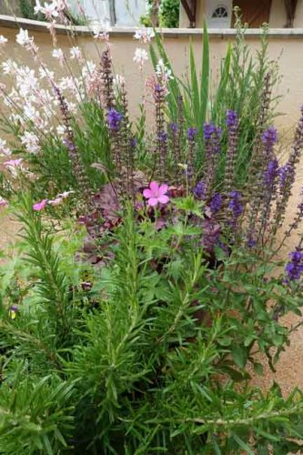 Early June - geranium, salvia and gaura. Summer planting ideas for containers.
